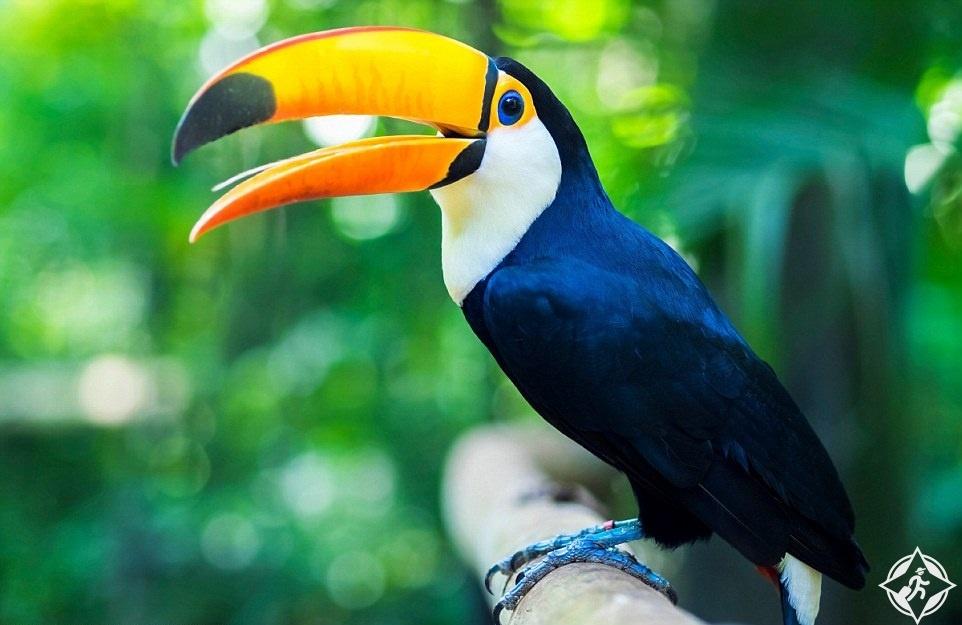 البرازيل-الاراضي الرطبة بانتانال-الحيوانات الملونة-أفضل الوجهات