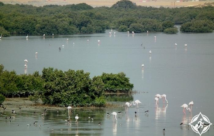 الإمارات-عجمان-محمية الزوراء الطبيعية-أماكن سياحية في عجمان