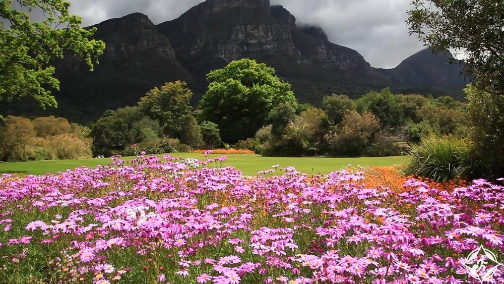 حدائق كيرستنبوش الوطنية النباتية