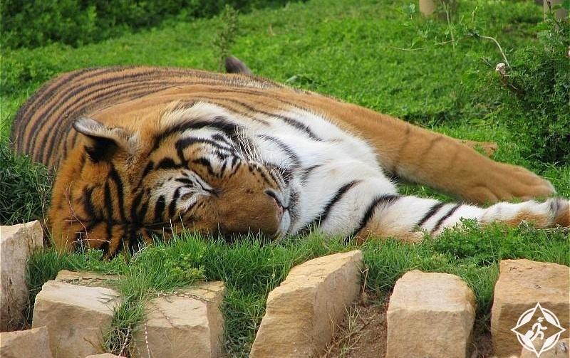 بالصور جولة داخل حديقة الحيوان بالرياض