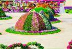 حديقة الزهور في دبي 13