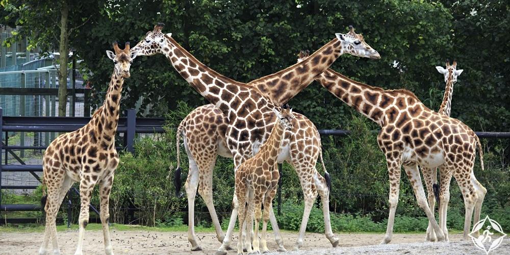 الأماكن السياحية في دبلن - حديقة حيوان دبلن