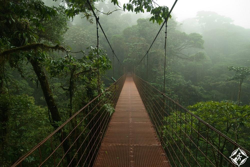 السياحة في كوستاريكا - غابة مونتيفيردي