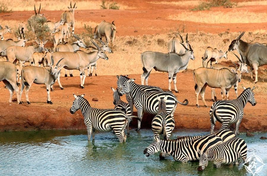السياحة في كينيا - حديقة تسافو الوطنية