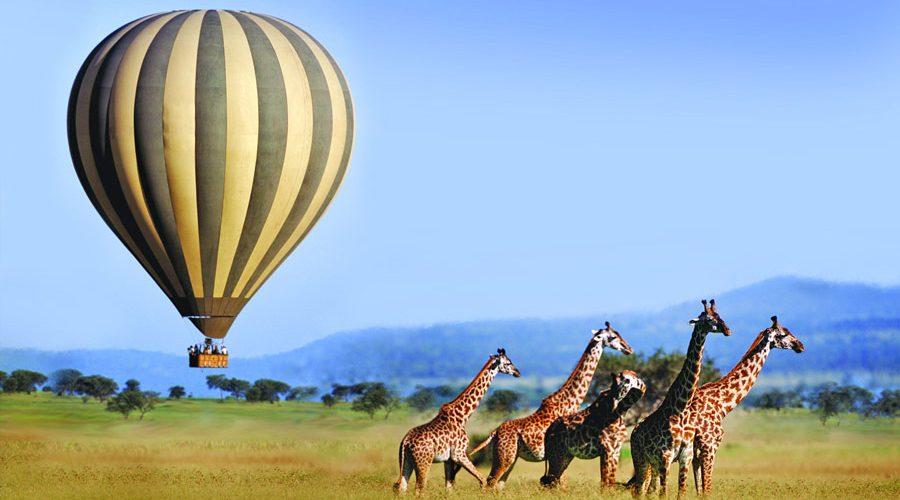 السياحة في كينيا - محمية ماساي مارا الوطنية