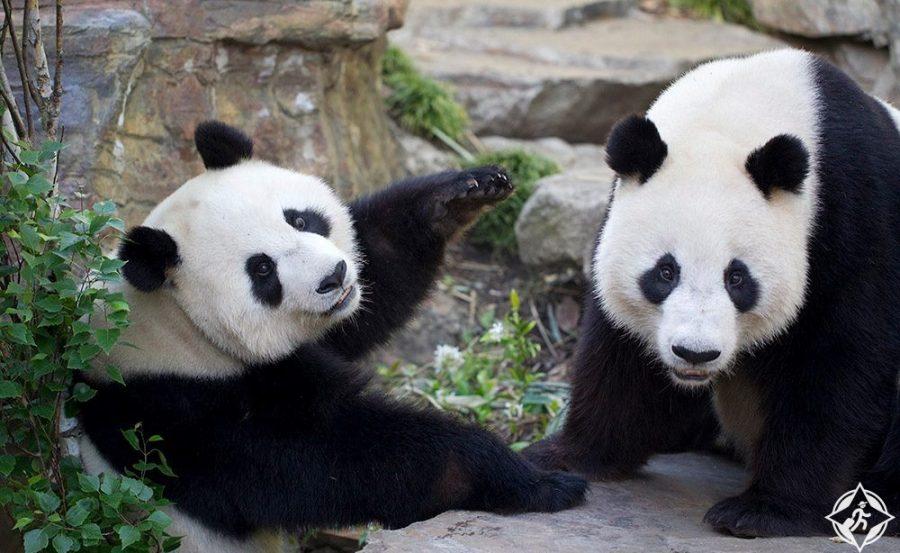 المعالم السياحية في أديلايد - حديقة حيوان أديلايد