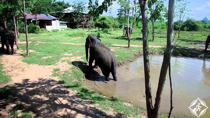 السياحة في كانشانابوري - عالم الفيل