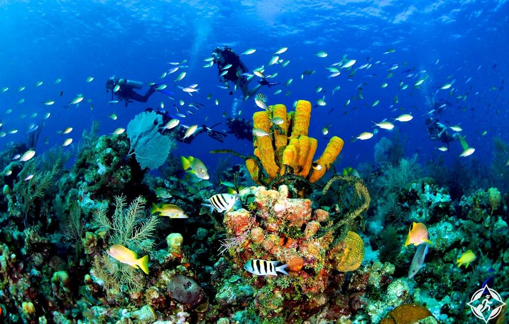 جزيرة كوزوميل - بالانكار ريف