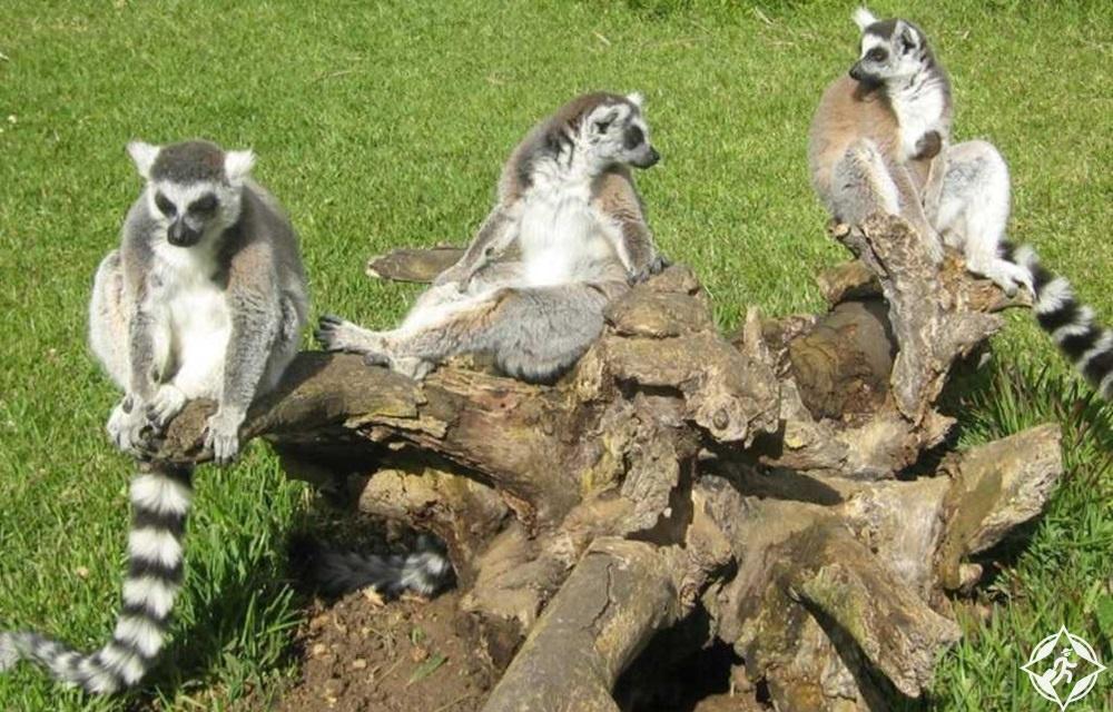 المعالم السياحية في لاغوس - حديقة حيوان لاغوس