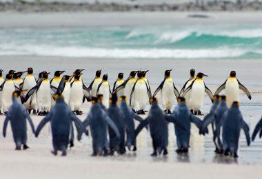 جزر فوكلاند - الحياة البرية