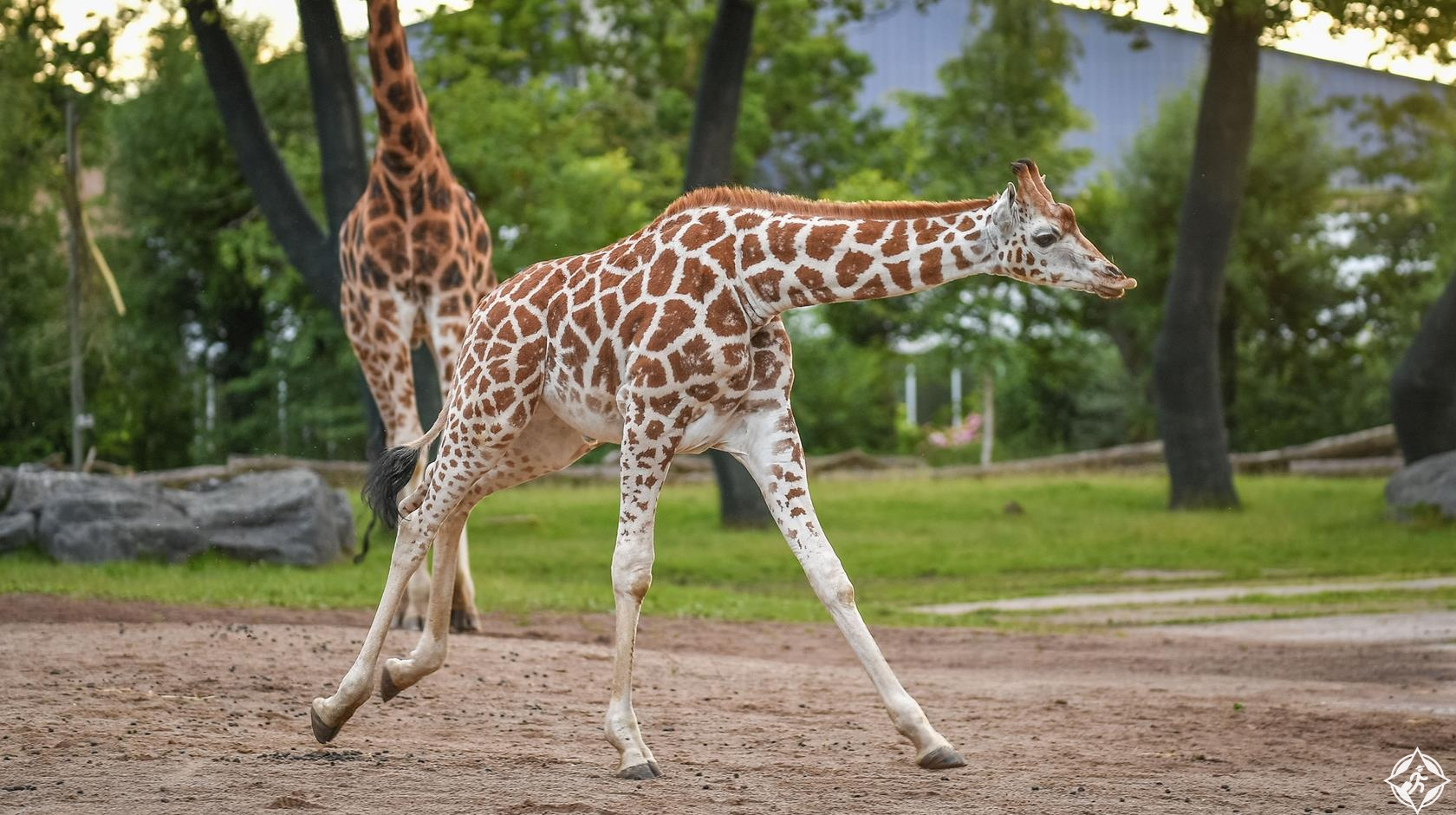 حديقة حيوان تشيستر - المملكة المتحدة - تشيستر
