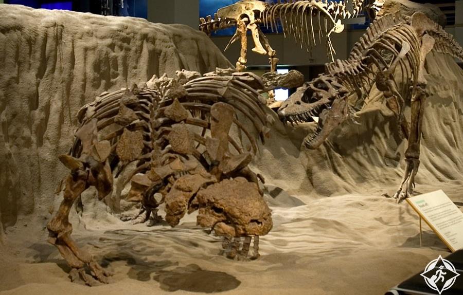 معالم الجذب السياحي في درومهيلر - متحف تيريل الملكي للحفريات