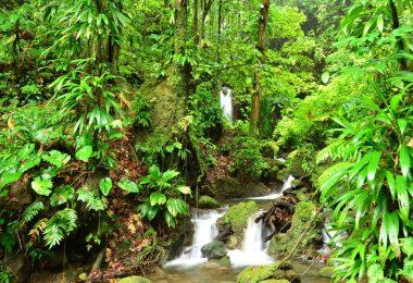 دومينيكا - منتزه مورن تروا بيتون الوطني 2