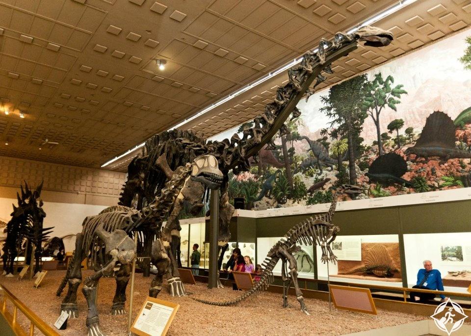 متحف ييل بيبودي للتاريخ الطبيعي-الولايات المتحدة الأمريكية-كونيتيكت