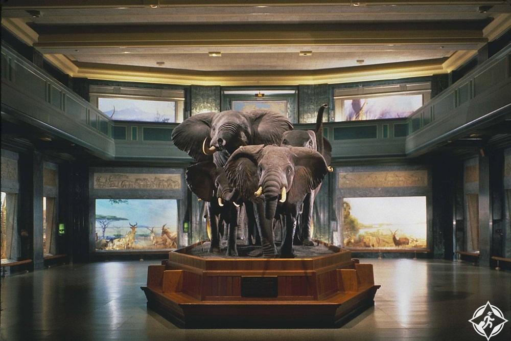 نيويورك - المتحف الأمريكي للتاريخ الطبيعي 2