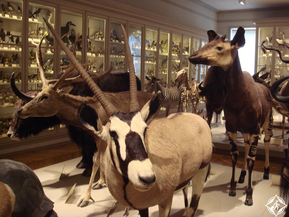 لا روشيل - متحف التاريخ الطبيعي