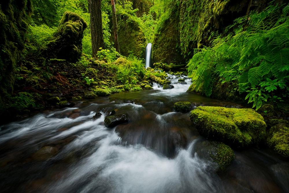 أوريغون - منطقة خليج كولومبيا الوطنية الخلابة