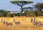 بوتسوانا