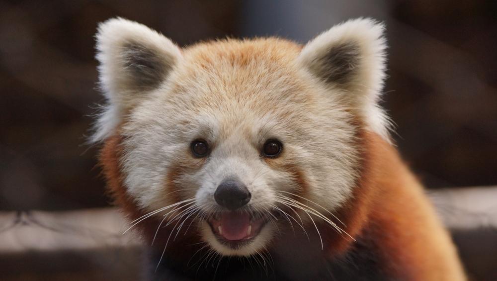 ديلاوير - حديقة حيوانات برانديون