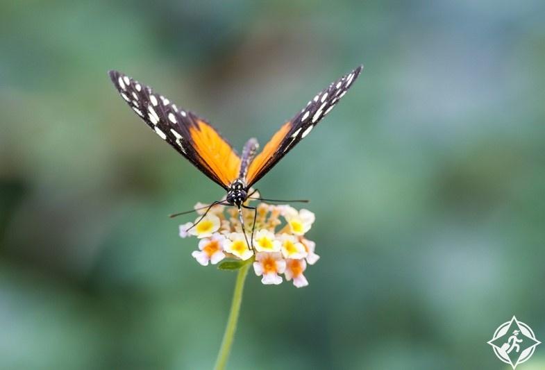 الوجهة السياحية الرائعة لمدينة امبوريابرافا حديقة-الفراشات.jpg