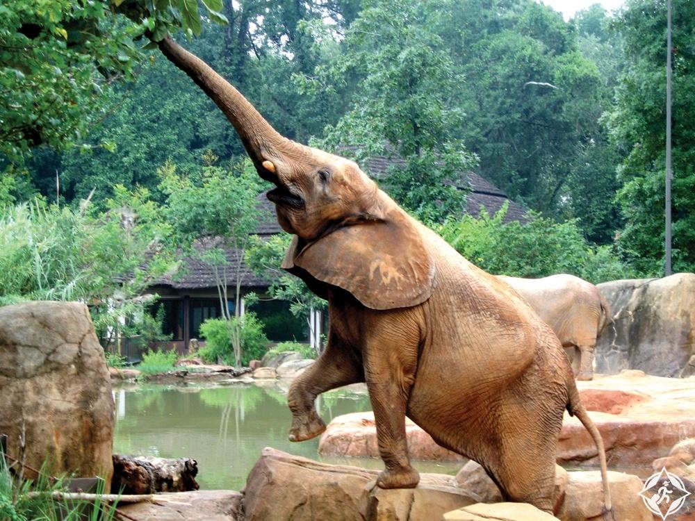 كارولينا الجنوبية - حديقة حيوان ريفربانكز