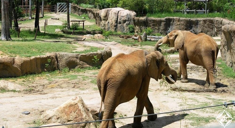 برمنغهام - حديقة حيوان برمنغهام