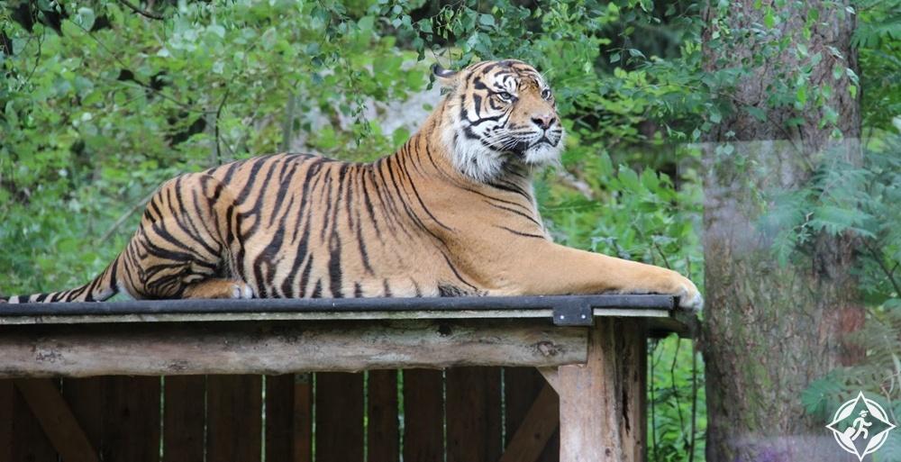 إسكيلستونا - حديقة حيوان باركين