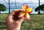 السفر إلى جزر فيجي
