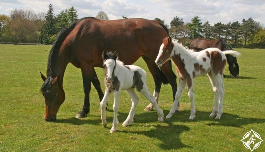 كرومر - ملاذ هيل سايد شاير للخيول