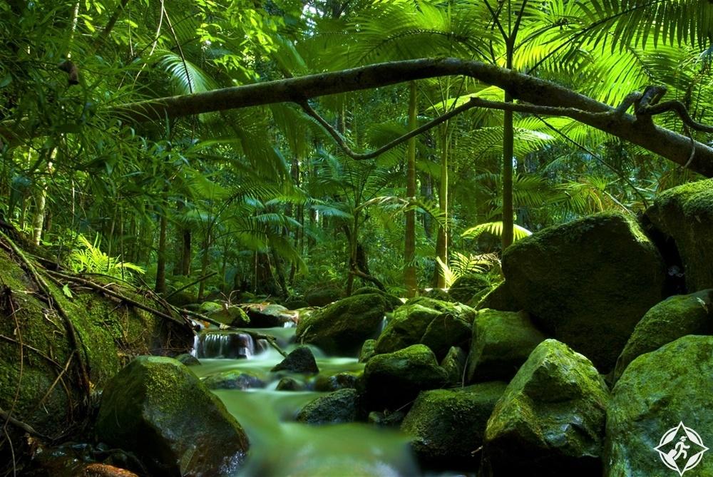 كوينزلاند - حديقة دينتري الوطنية