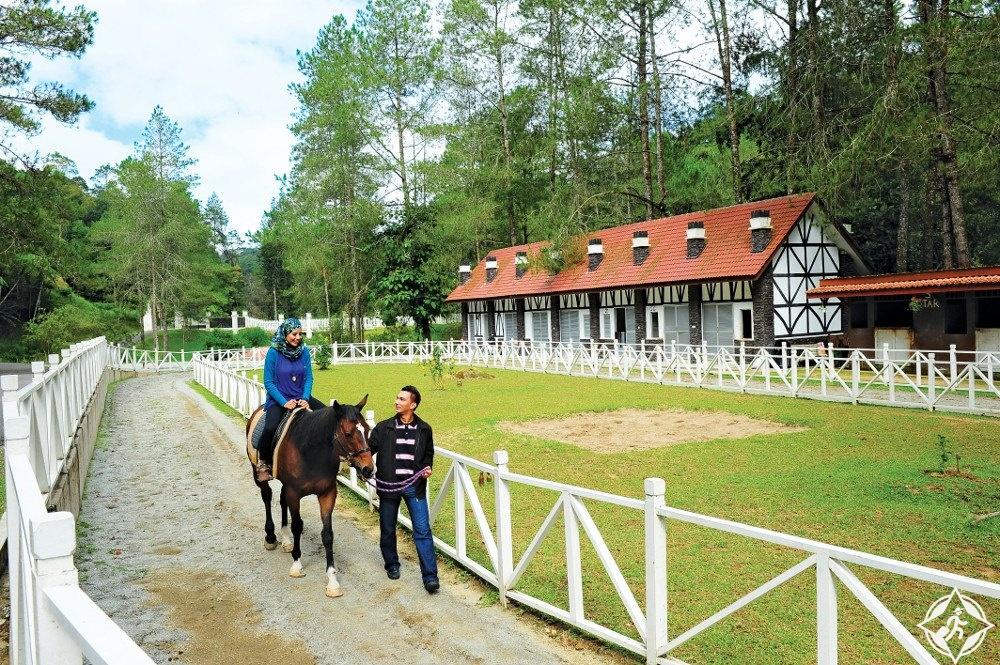 مرتفعات جنتنج - مزرعة أوانا للخيول