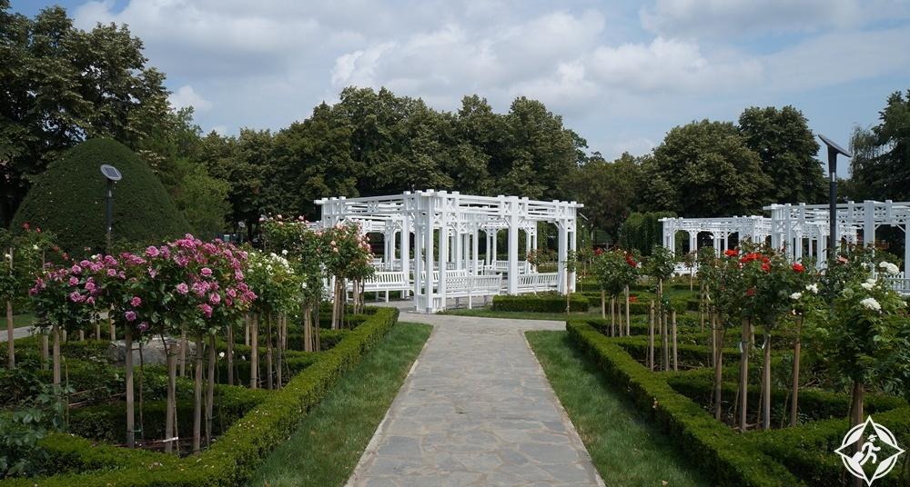 تيميشوارا - حديقة الورود