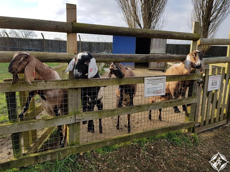 لوتن - مزرعة وودسايد للحيوانات